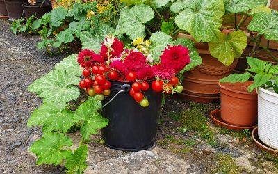 Gartenarbeit – der flexible UNI – Eimer als perfekter Helfer