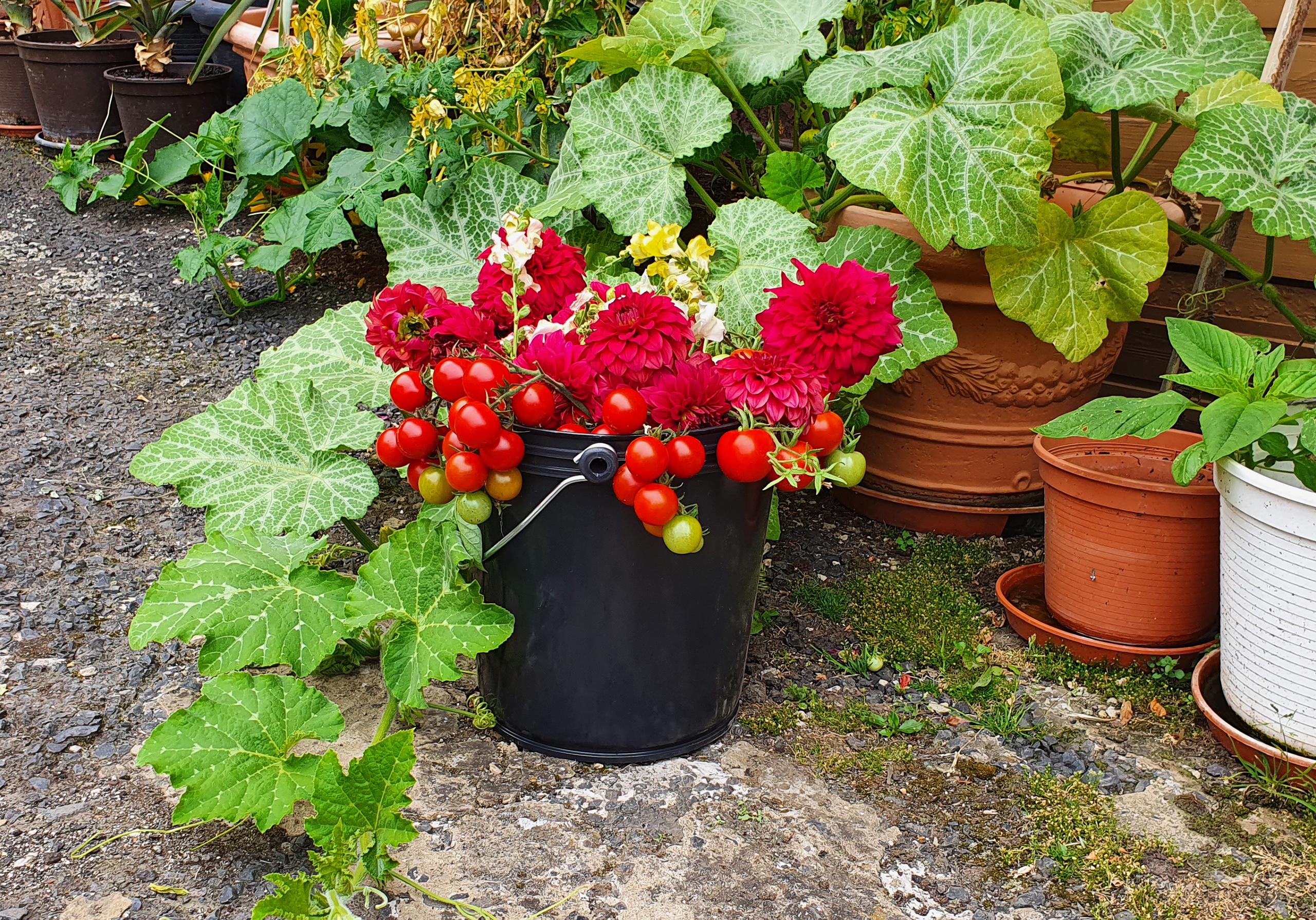 Der flexible UNI - Eimer als perfekter Helfer bei der Gartenarbeit